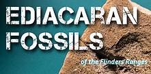 Ediacraran fossils.png