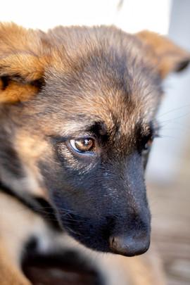 Puppy Dog Eyes.jpg
