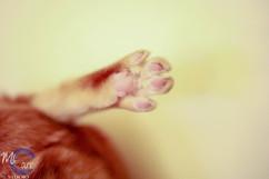 Toe Beans!