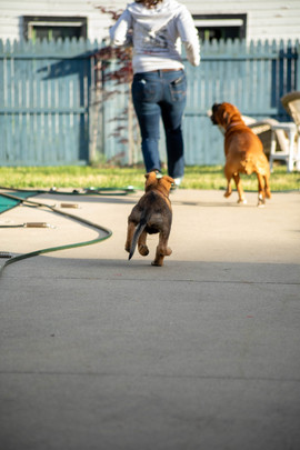 Chasing Momma