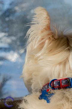 Guard Dog On Duty