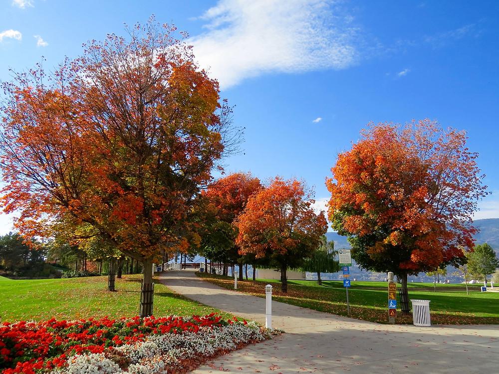 Herbst im Ayurveda