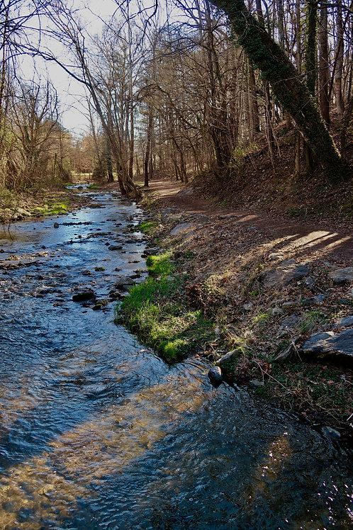 A Walk Through The Creek