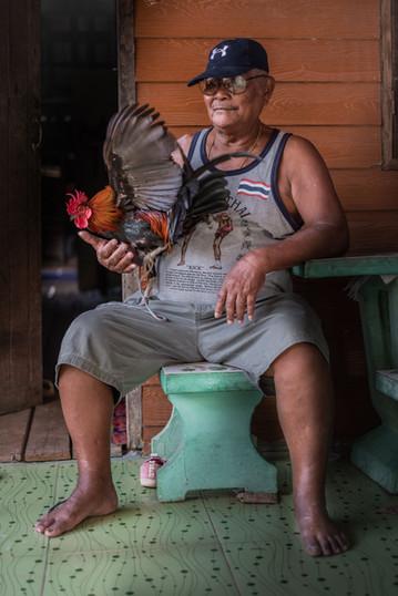 Cockeral breeder