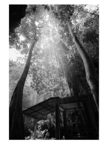 Heavenly Canopy