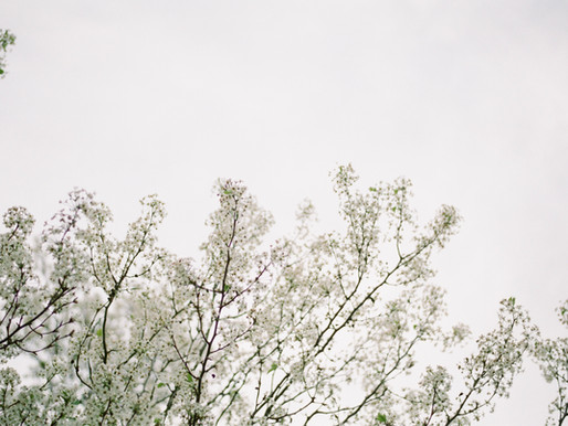 Spring Blossoms on Film