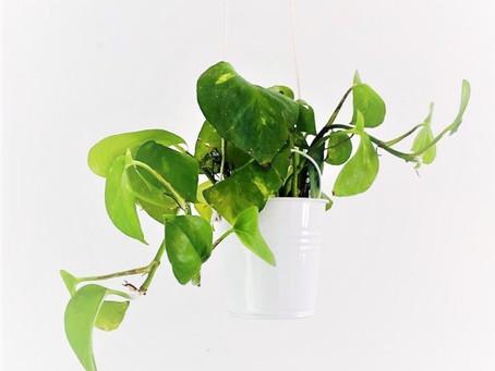 Plantas lindas y fáciles de cuidar