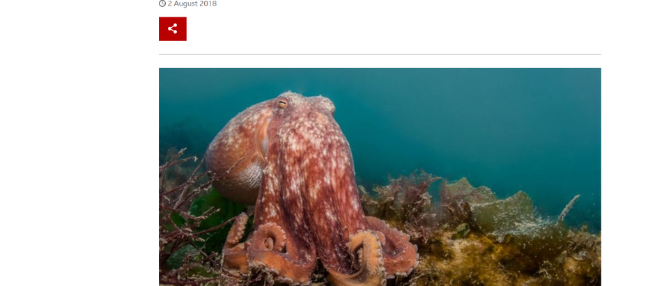 Octopuses: How citizen scientists are uncovering their secrets