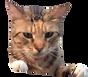 S__8650754-removebg-preview_edited_edite