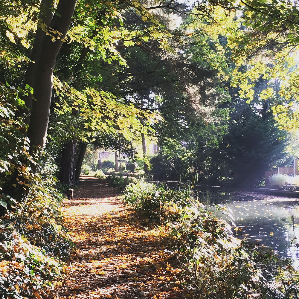 Basingstoke Canal, Hampshire