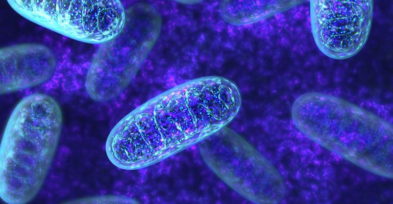 An image of mitochondria. Part of the Qwiz5 series by Qwiz Quizbowl Camp, written to help quiz bowl teams power more tossups!