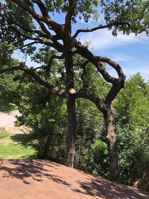 Tree Health Inspection