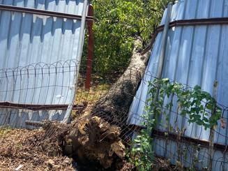 Tree on fence.jpg