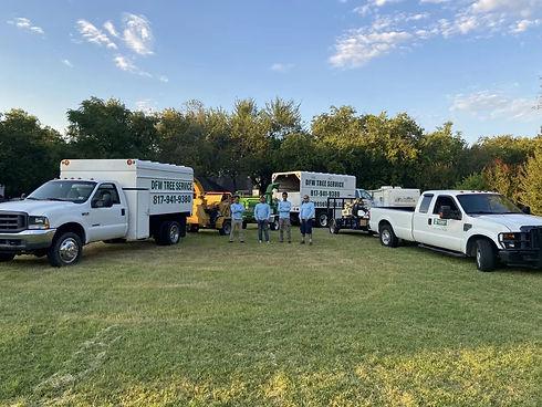 Tree service | stump removal | best tree service