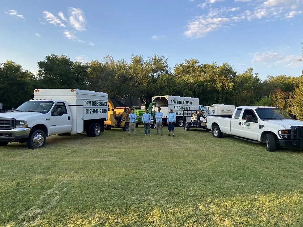 Tree Service Arlington TX | Stump removal | Tree trimming and pruning