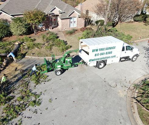 DFW tree service | tree removal | tree service Arlington