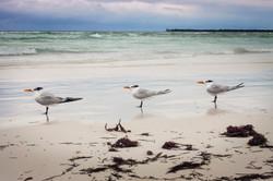 birds Punta Alen