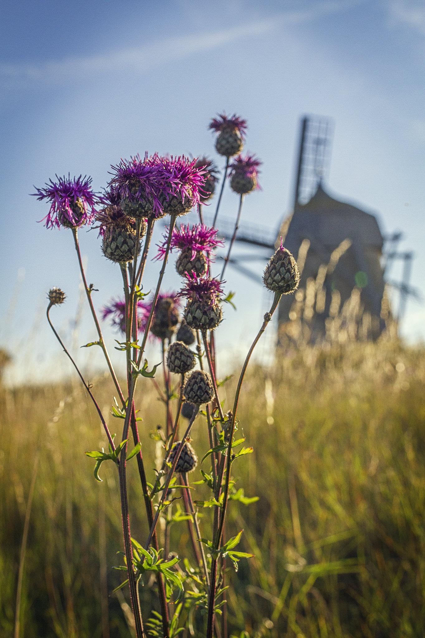 molino flores gotland