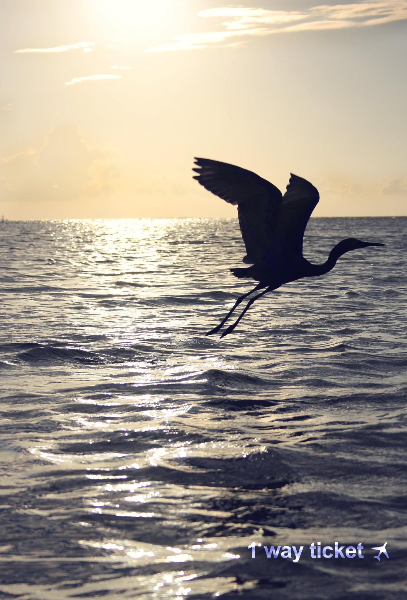Bird Holbox