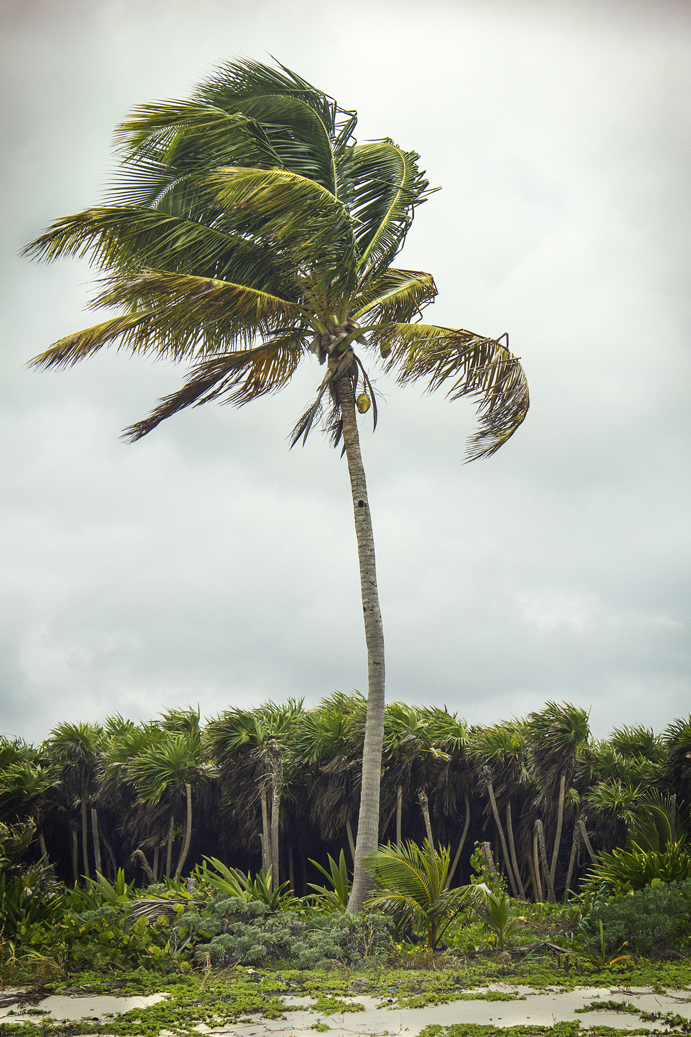Punta Allen palmera web