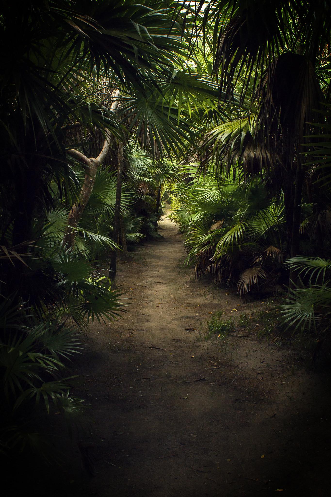 Punta Allen selva