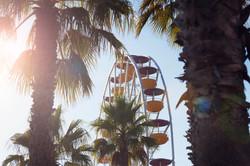 france wheel palms