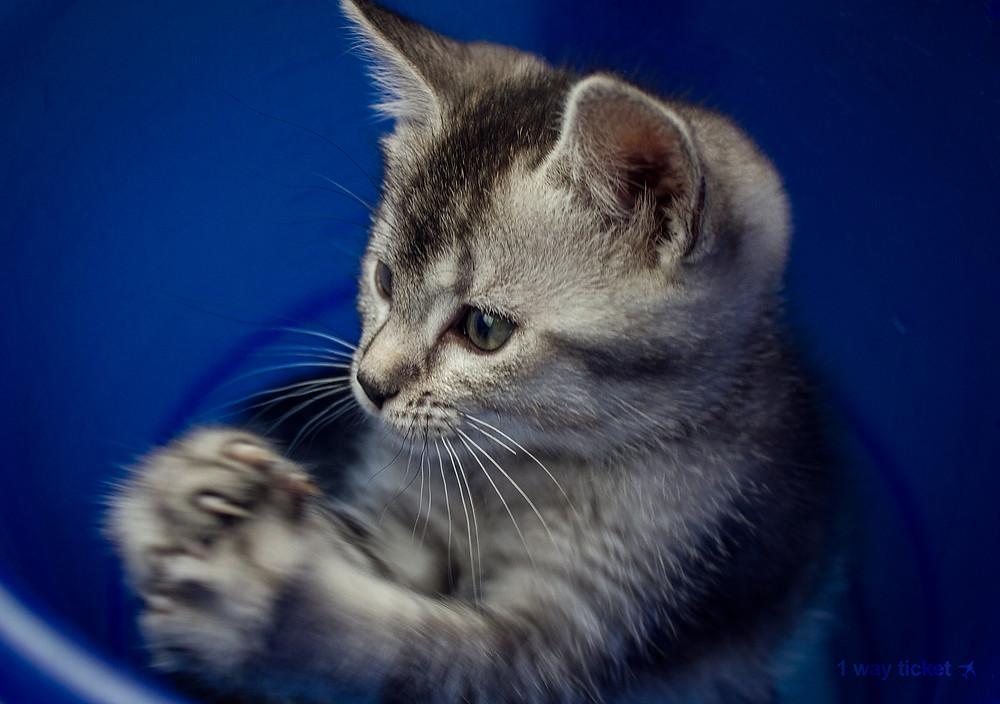 gatito-internet.jpg