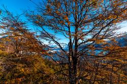 Otoño en la Patagonia
