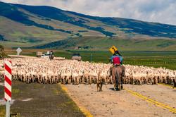 Taco en la Patagonia