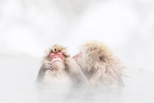 Hot Kiss