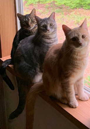 Traz, Lexi and Pax sitting in the window. Lovers of Furicanes Pet Strore and their human parents.
