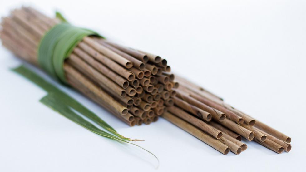 Leafy Straw - Coconut Palm Leaf Drinking Straws (50 Count)