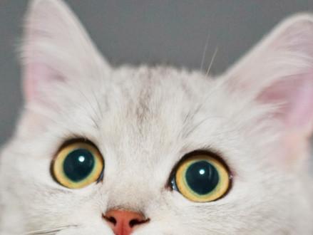 Feline Body Language - Identifying Your Cat's Behaviour