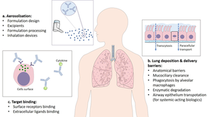Our new review paper in Pharmaceutics