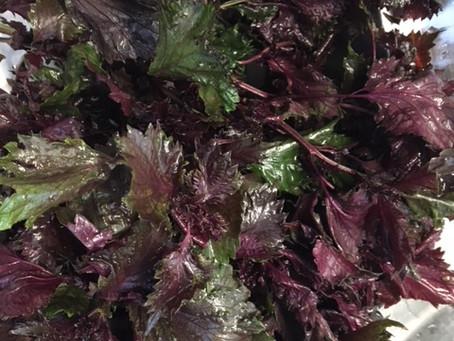 紫蘇(しそ)ジュース