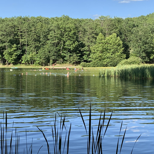 AlgaeTracker keeps pond safe with better tracking of Harmful Algae Blooms
