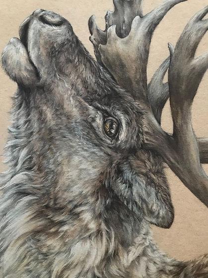 Caribou art