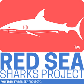 08 - Red Sea Sharks Project.png