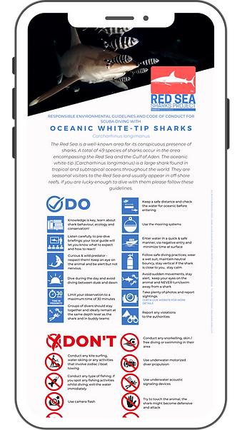 Sharks of the Red Sea - Red Sea Project.