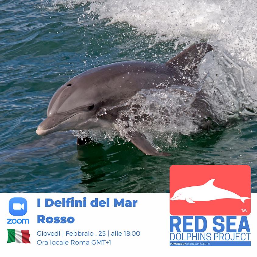 I delfini del Mar Rosso