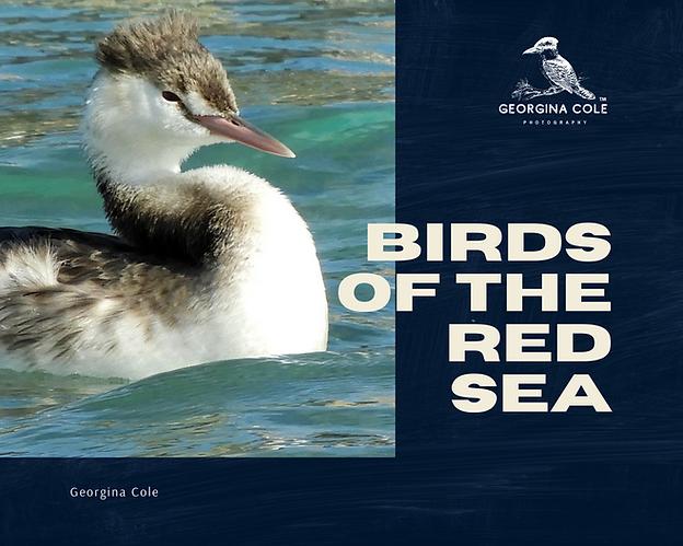 Birds of the Red Sea - Georgina Cole - R
