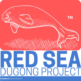 11 - Red Sea Dugong Project.png
