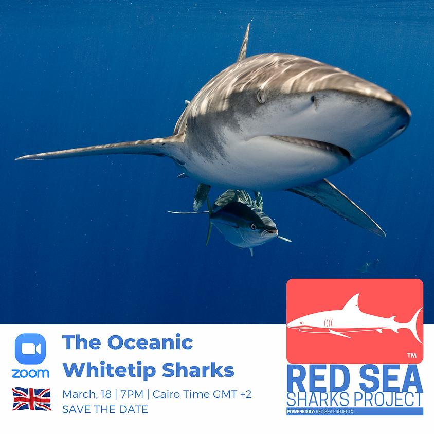 The Oceanic Whitetip Sharks