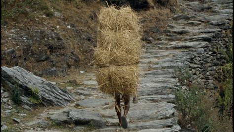Hay Ride #1