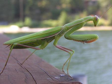 Из жизни насекомых II