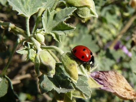 Из жизни насекомых I