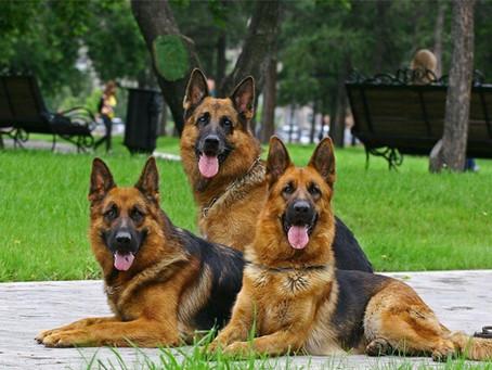 Собаки, скоросшиватели и прочее