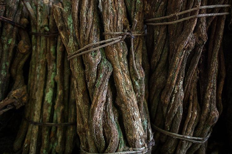 close up chopped stalks of ayahuasca cre