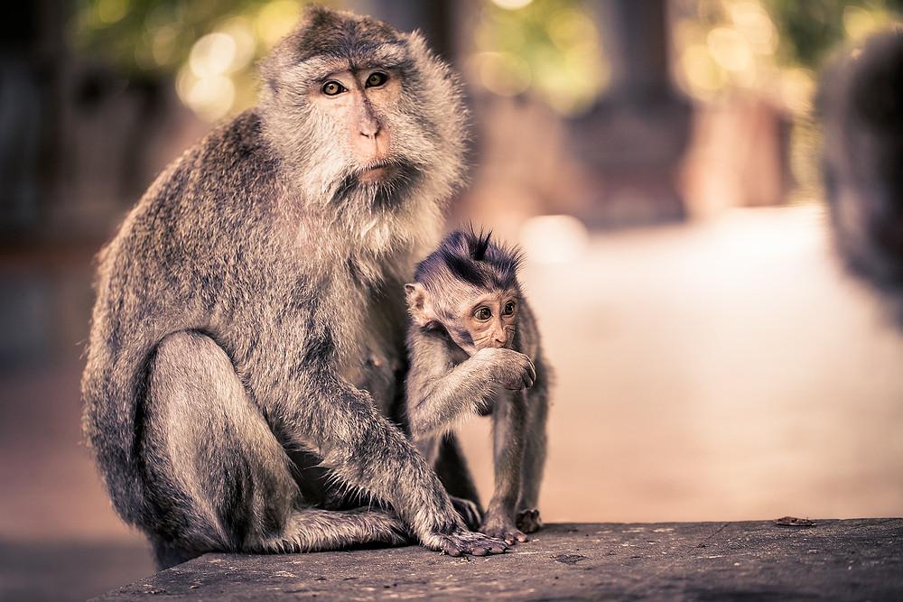 preventing rabies by avoiding rabid animals