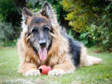 5 Top Tips for Exercising Older Dogs